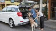 """CHEVROLET แนะนำเคล็ดลับการเดินทางพร้อมสัตว์เลี้ยง กรุงเทพฯ – เชฟโรเลตมุ่งตอบสนองการใช้งานรถทุกรูปแบบรวมถึงลูกค้า ที่รักสัตว์เลี้ยง อย่างคุณชณัฎฐา หวังปักกลาง เจ้าของรถเชฟโรเลต เทรลเบลเซอร์ ที่มาพร้อมเนื้อที่ห้องโดยสาร อันกว้างขวางรองรับทุกสมาชิกในครอบครัวและสุนัขอีกสองตัว คือ ชีล่าและฟัดจี้ ครอบครัวหวังปักกลาง จากพัทยาเคยใช้รถกระบะโคโลราโด และเป็นหนึ่งในแฟนพันธุ์แท้เชฟโรเลตที่ชื่นชอบการเดินทาง พร้อมหน้าทั้งครอบครัวสู่ทุกจุดหมาย """"หลังจากมีลูก ครอบครัวของเราจำเป็นต้องใช้รถที่มีความปลอดภัยและกว้างขวางที่สามารถพา ทุกสมาชิกในครอบครัวเดินทางไปพร้อมกันได้ ฟัดจี้และชีล่ามีพื้นที่ในรถเทรลเบลเซอร์ที่แบ่งสัดส่วนชัดเจนซึ่งให้ความ ปลอดภัยและดูแลทำความสะอาดง่าย เราชื่นชอบเทรลเบลเซอร์เพราะมีช่องแอร์ครบทั้งสามแถวที่นั่ง ฟัดจี้เป็นพันธุ์ชิสุซึ่งขนเยอะและขี้ร้อน เทรลเบลเซอร์ที่มีช่องแอร์ทั้งสามแถวจึงช่วยให้ทั้งฟัดจี้ และสมาชิกในบ้านเย็นสบายตลอดการเดินทาง"""" คุณชณัฎฐากล่าว สัตว์เลี้ยงอย่างสุนัขและแมวได้รับความนิยมเพิ่มมากขึ้นในประเทศไทย กรมปศุสัตว์ระบุว่าในปี..."""